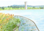 Furman University Lake Restoration Project