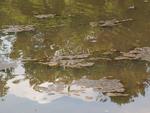 Algal mats close up by Wade Worthen