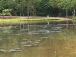 Algal mats on Furman Lake by Wade Worthen
