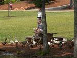 Feeding the waterfowl by Wade Worthen
