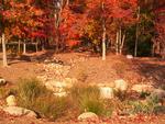 Furman Lake rain garden