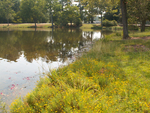 Natural revegetation at Furman Lake