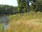Natural revegetation at Furman Lake by Wade Worthen
