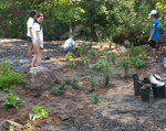 Installing new plants by Wade Worthen