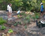 Installing new plants